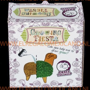 Growing fiesta schaap